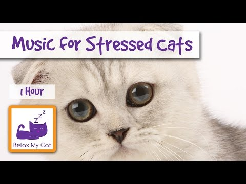1 Hour of Cat Music for Stressed Cats and Kittens