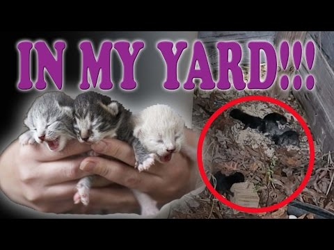 😱 FINDING NEWBORN KITTENS IN MY YARD! 🐱