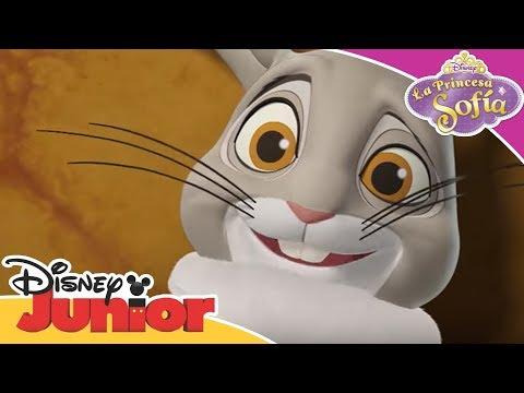 La Princesa Sofía: El conejo de concurso | Momentos Disney Junior - Canal Oficial