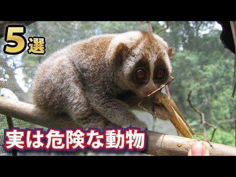 危険な動物ランキング!!あの動物園の人気者も!? | 生き物係 -ikimono kakari-