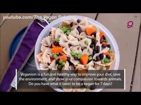 7 Day Vegan Challenge in Qatar