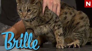 Brille - Hvorfor er katter redd for vann?
