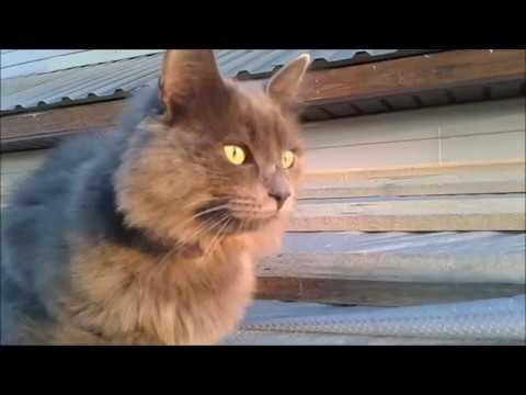 Кот в дозоре