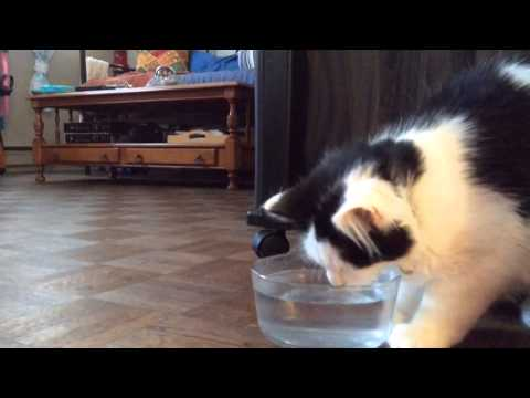Thumbnail for Cat Video The Oreo Cat: The Water Ritual