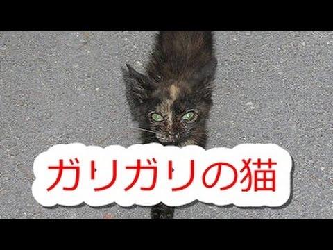 【感動実話】ガリガリの猫