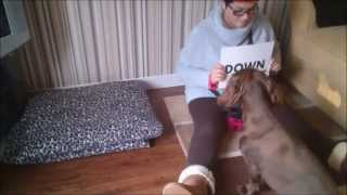 Bella the dog reading sit & down -  Bella