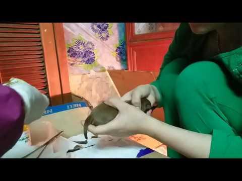 Cách cắt đuôi cho chó con mới sinh