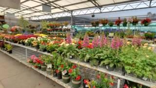 Green Thumb Nursery Hardware & Patio | Ventura, Ca | Plant Nursery