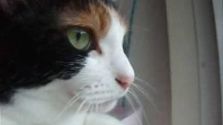 睡魔と闘う猫の声 - Cat fought against sleepiness. thumbnail