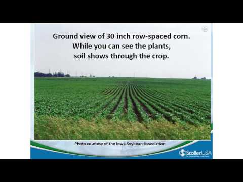 Small-Sample-Size Statistics in Agriculture: 8) Woodward