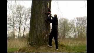 Brasco - Staffordshire Bull Terrier - Training Of Tree Climbing