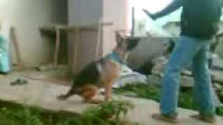 My Self Training My Dog 3 (hemanth Bangalore)