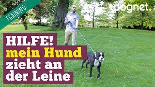 Hilfe, mein Hund zieht an der Leine! | Training Hundeerziehung