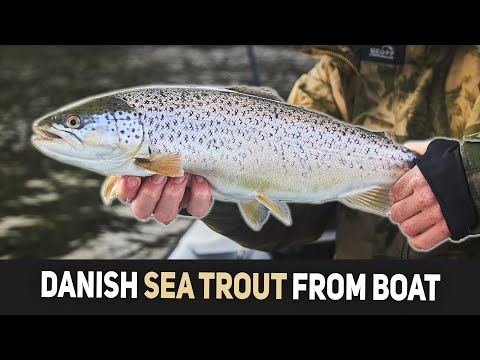 Sea Trout Fishing From Boat - Chasing Silver On Shallow Water!