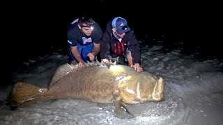 Fishing for Giant Goliath Grouper from the Beach - 4K