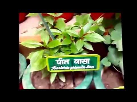 Medicine Plants | जड़ीबूटियाँ एवं उनकी पहचान