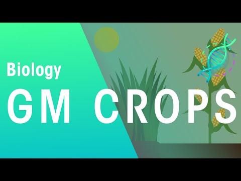 GM Crops | Genetics | Biology | FuseSchool