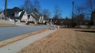 Sitmeanssit- Douglasville Dog Training -goldendoodle Client