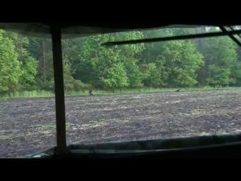 Hunting Michigan Gobblers - The RUSH TV Ep. 1 My 18 2015