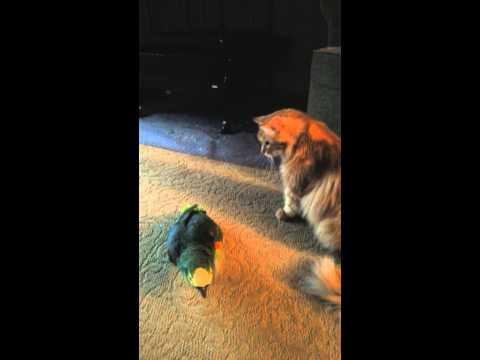 Terri's bird asks an important question