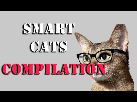 i wish my cat can do that (smart cats ) Compilation