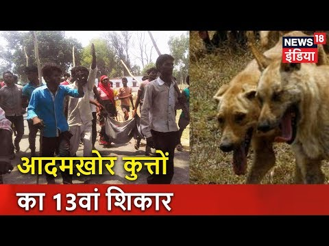UP: आदमख़ोर कुत्तों का 13वां शिकार