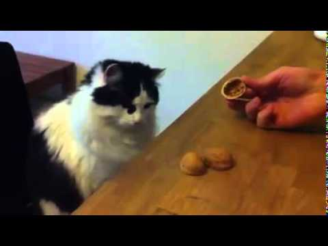 Cat Intelligence.mp4