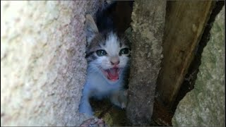 Little lost kitten crying out loud