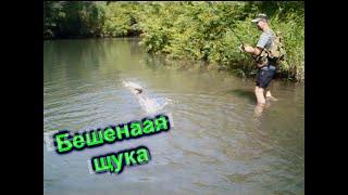 Бешенная щука пойманная моим другом Рыбалка на щуку
