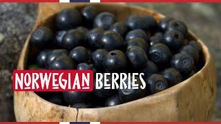 Norwegian Berries: THE BEST IN THE WORLD