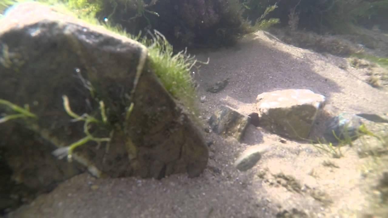 Download GoPro Rock Pool in Rhosneigr North Wales