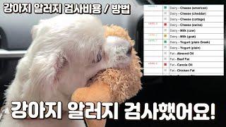 강아지 알러지검사 후기 / 알러지검사비용, 방법, 눈물…