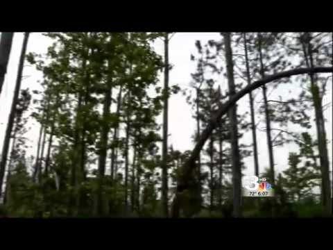 Ice Storm Still Chilling Georgia Timber Harvest   Local news weather sports Savannah  WSAV On Your S