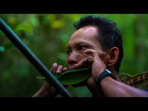 A Hunter From The Penan Tribe In Borneo Jungle