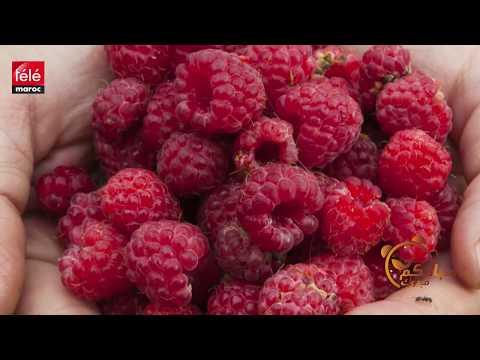 b7b6ac95b مستهلك..الفرومبواز فاكهة لذيذة و لكن ماهي فوائدها؟ - تيلي ماروك