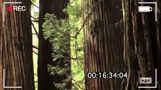 видео Проблемы экологии в современном мире