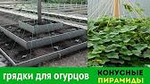 Лагенария Гусь в яблоках, семена (65338): купить семена в интернет .