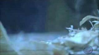 CSI: A Clue In A Rat