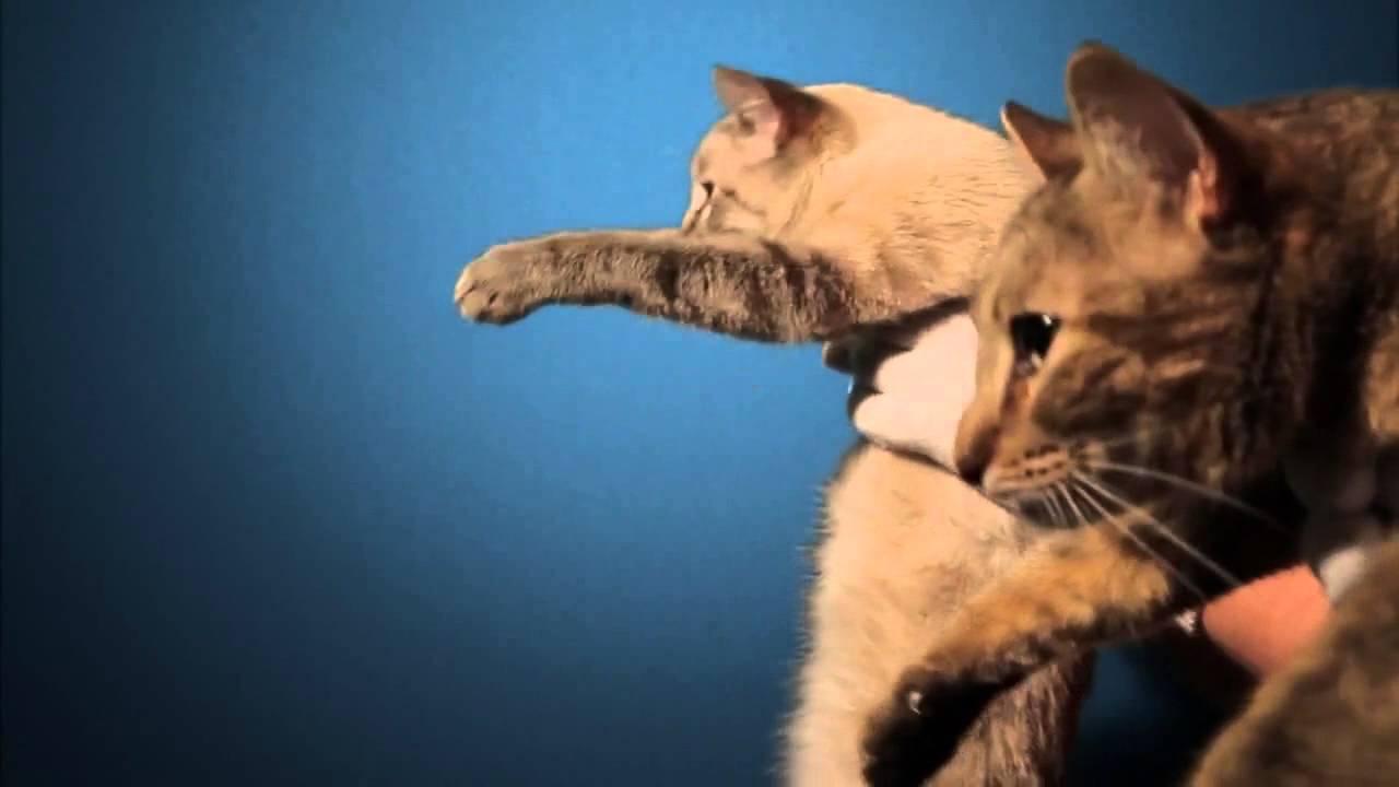 ответ рекламы ягуара мерседесу