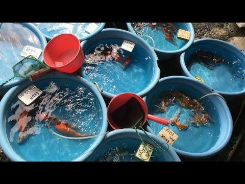 Fishy business at KL's Pudu market