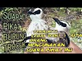 Suara Pikat Burung Trucuk Trucukan  Mp3 - Mp4 Download