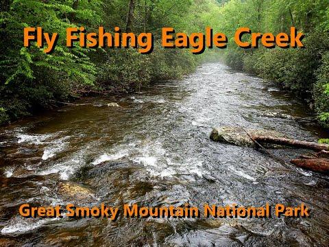 Fly Fishing Eagle Creek (GSMNP)