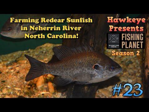 Fishing Planet S2 - Ep. #23: Farming Redear Sunfish at Neherrin River, North Carolina!