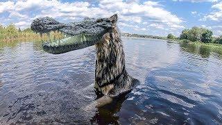 Собаки и Лохнесское чудовище в Ольховке
