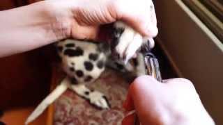 видео Когтерезка для кошек: виды и рекомендации, как ей пользоваться