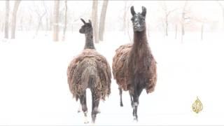 الثلوج تغطي ولايتي مشيغن ومنيسوتا وتعطل مئات الرحلات الجوية