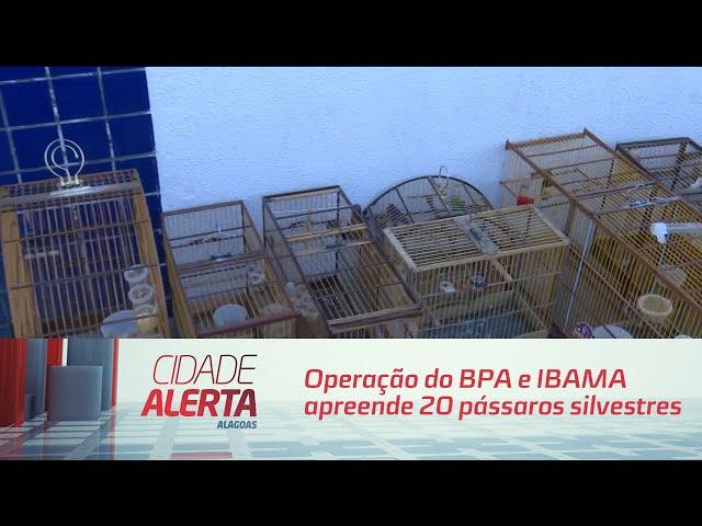 Operação do BPA e IBAMA apreende 20 pássaros silvestres em Rio Largo