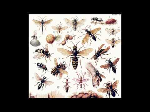 Красная книга о на  насекомых