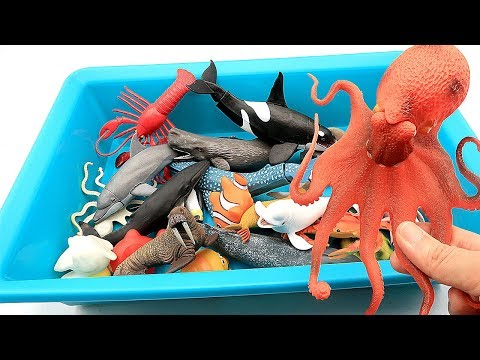 Learn Sea Animals Names With Toys Shark Octopus Beluga Turtle Fish Crab! Learn Color Water Ocean