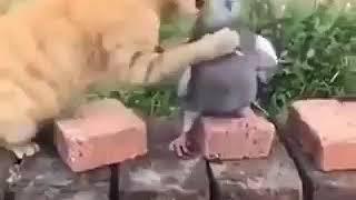 Kedi ile güvercinin şakalaşması